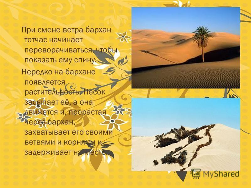 Когда ветер долго дует в одном направлении на песок, то песок начинает двигаться и из него образуются красивые, определённой формы барханы. Барханы – песчаные холмы в пустыне. Одна сторона у них всегда выпуклая, напоминающая сутулую спину, и всегда о