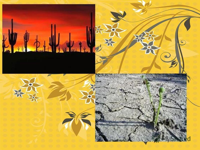 Многие растения пустыни живут только в прохладное время года когда больше влаги, - ранней весной и поздней осенью. В эти периоды понижения между песчаными холмами- барханами превращаются в цветущие лужайки. Ярко- красные пустынные маки образуют пёстр