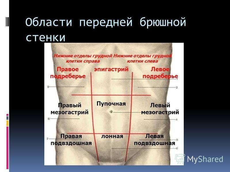Области передней брюшной стенки Правое подреберье Правый мезогастрий Правая подвздошная Левая подвздошная Левый мезогастрий Левое подреберье эпигастрий Пупочная лонная Нижние отделы грудной клетки справа Нижние отделы грудной клетки слева