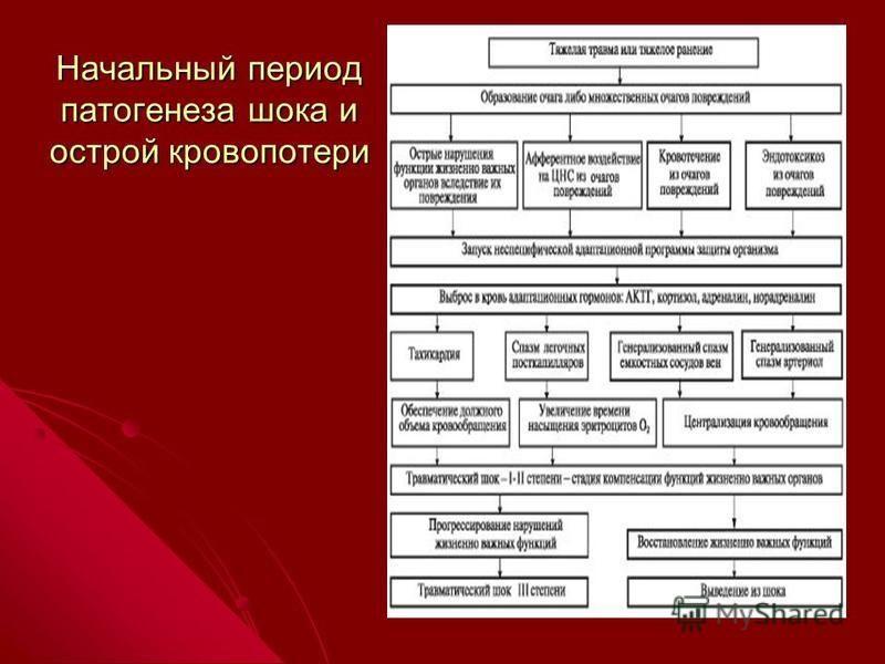 Начальный период патогенеза шока и острой кровопотери