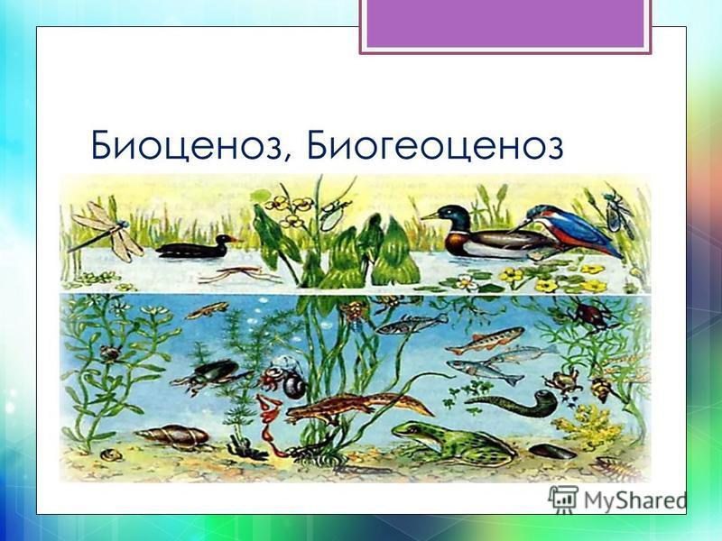 Биоценоз, Биогеоценоз
