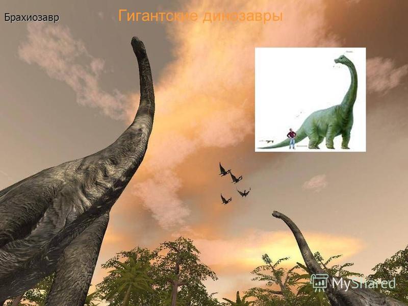 Гигантские динозавры Брахиозавр