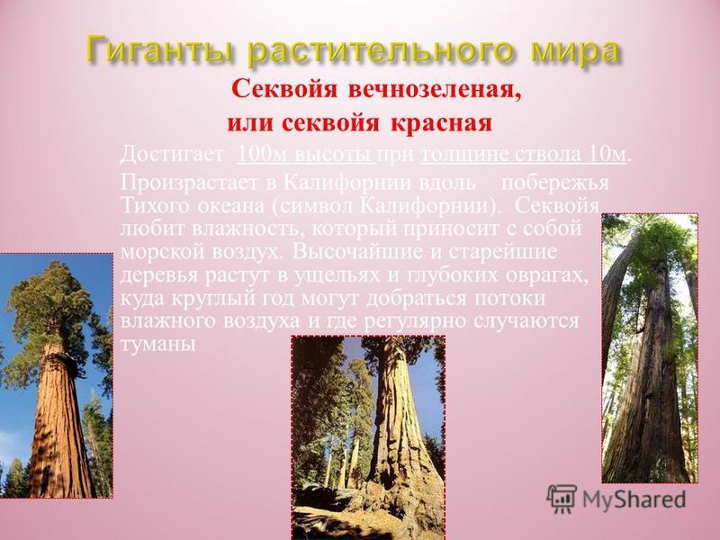 Кордаитовне полностью и давно вымершие растения. Вымерли