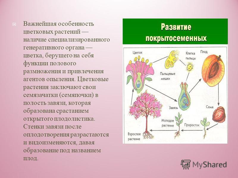 Отдел высших растений, отличительной особенностью которых является наличие цветка в качестве органа полового размножения и замкнутого вместилища у семяпочки ( а затем и у происшедшего из неё семени, откуда и появилось название покрытосеменнне ). Ещё