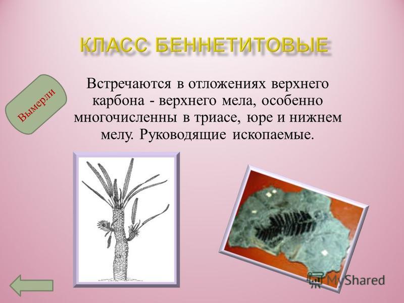 Это самая древняя, полностью вымершая группа голосеменных, жившая с середины девона до мелового периода ; расцвет их приходился на каменноугольный период. В эту группу объединяют растения, имевшие папоротниковый облик, но формировавшие семязачатки. В