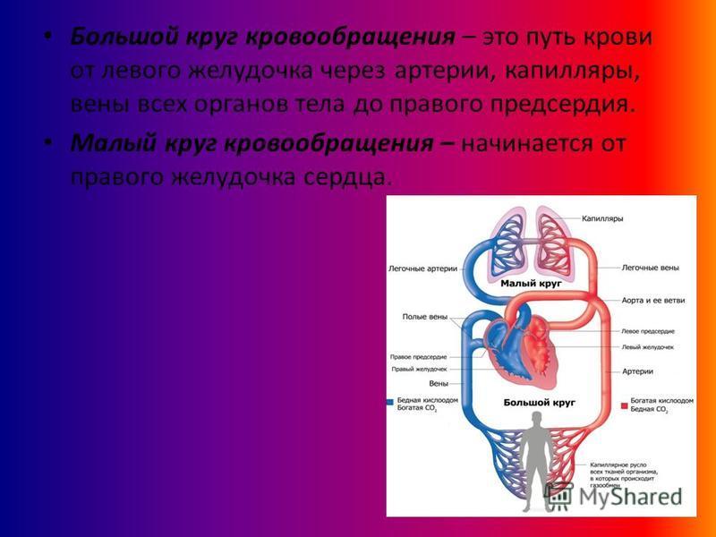 Большой круг кровообращения – это путь крови от левого желудочка через артерии, капилляры, вены всех органов тела до правого предсердия. Малый круг кровообращения – начинается от правого желудочка сердца.