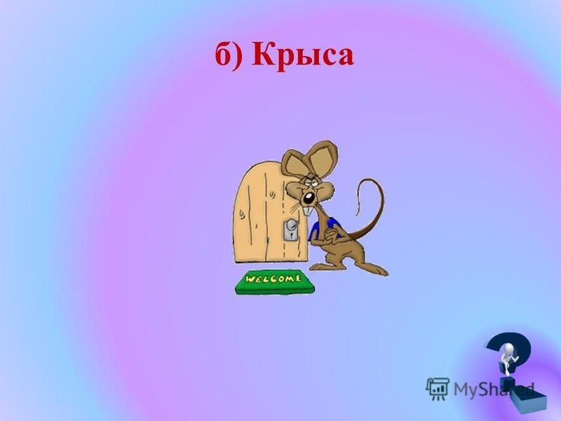 б) Крыса