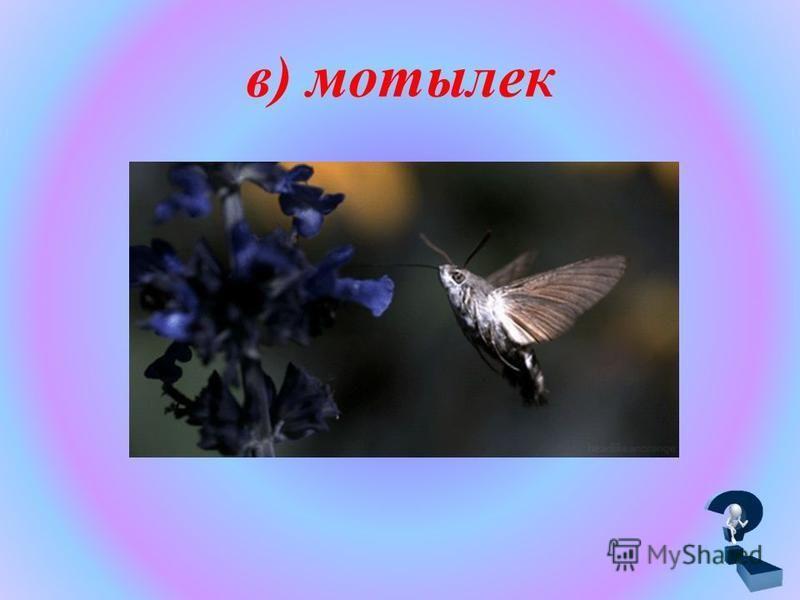 в) мотылек