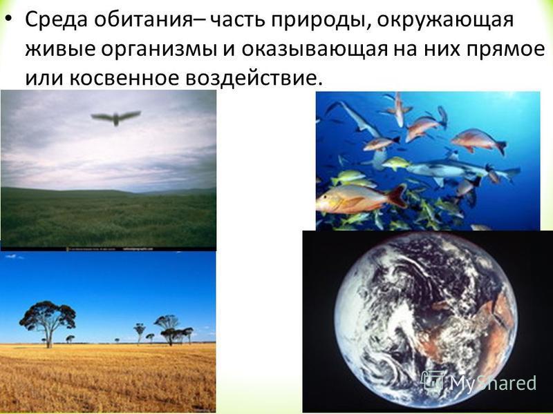 Среда обитания– часть природы, окружающая живые организмы и оказывающая на них прямое или косвенное воздействие.