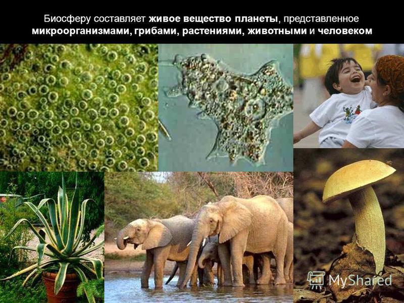 Биосферу составляет живое вещество планеты, представленное микроорганизмами, грибами, растениями, животными и человеком
