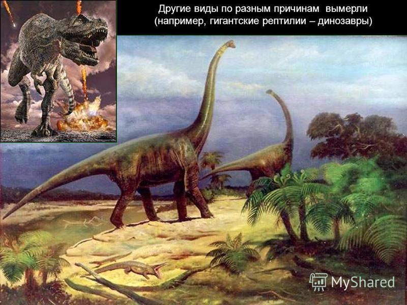 Другие виды по разным причинам вымерли (например, гигантские рептилии – динозавры)
