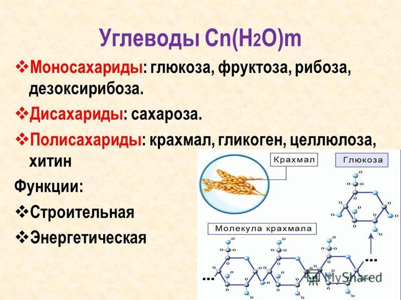 Углеводы Сn(H 2 O)m Моносахариды: глюкоза, фруктоза, рибоза, дезоксирибоза. Дисахариды: сахароза. Полисахариды: крахмал, гликоген, целлюлоза, хитин Функции: Строительная Энергетическая
