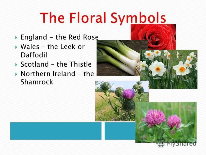 England - the Red Rose Wales – the Leek or Daffodil Scotland – the Thistle Northern Ireland – the Shamrock