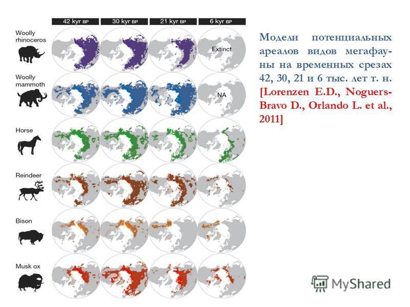 Модели потенциальных ареалов видов мега фауны на временных срезах 42, 30, 21 и 6 тыс. лет т. н. [Lorenzen E.D., Nogueґs- Bravo D., Orlando L. et al., 2011]