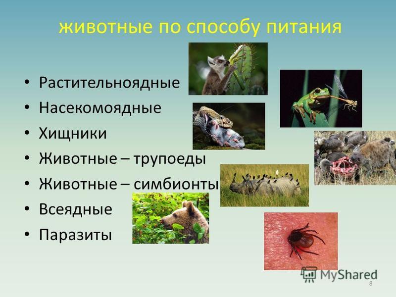 животные по способу питания Растительноядные Насекомоядные Хищники Животные – трупоеды Животные – симбионты Всеядные Паразиты 8