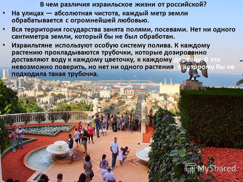 В чем различия израильское жизни от российской? На улицах абсолютная чистота, каждый метр земли обрабатывается с огромнейшей любовью. Вся территория государства занята полями, посевами. Нет ни одного сантиметра земли, который бы не был обработан. Изр