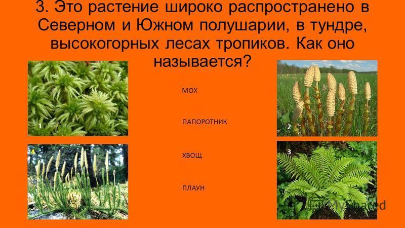 3. Это растение широко распространено в Северном и Южном полушарии, в тундре, высокогорных лесах тропиков. Как оно называется? 1 3 2 4 МОХ ПАПОРОТНИК ХВОЩ ПЛАУН