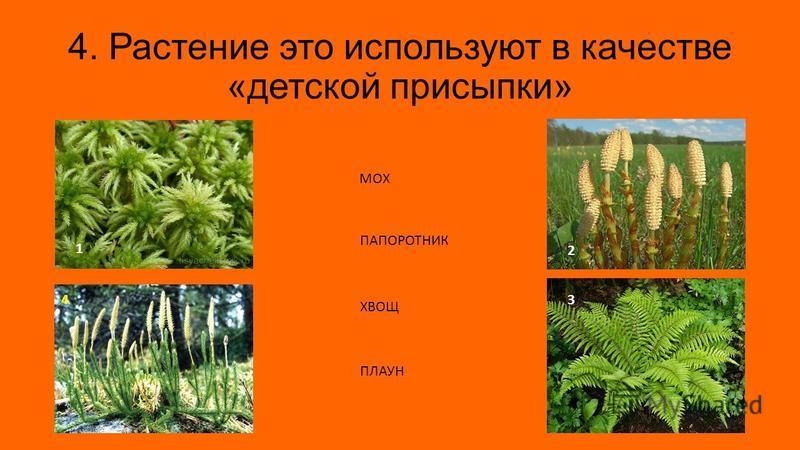 4. Растение это используют в качестве «детской присыпки» 1 3 2 4 МОХ ПАПОРОТНИК ХВОЩ ПЛАУН
