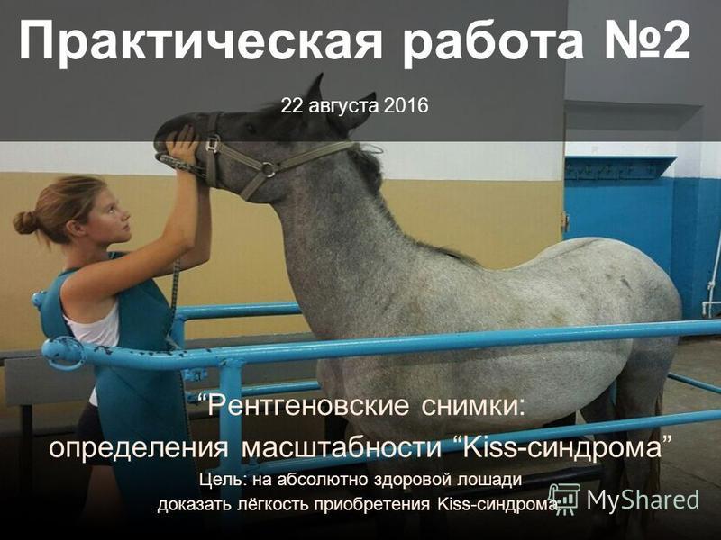 Практическая работа 2 22 августа 2016 Рентгеновские снимки: определения масштабности Kiss-синдрома Цель: на абсолютно здоровой лошади доказать лёгкость приобретения Kiss-синдрома.