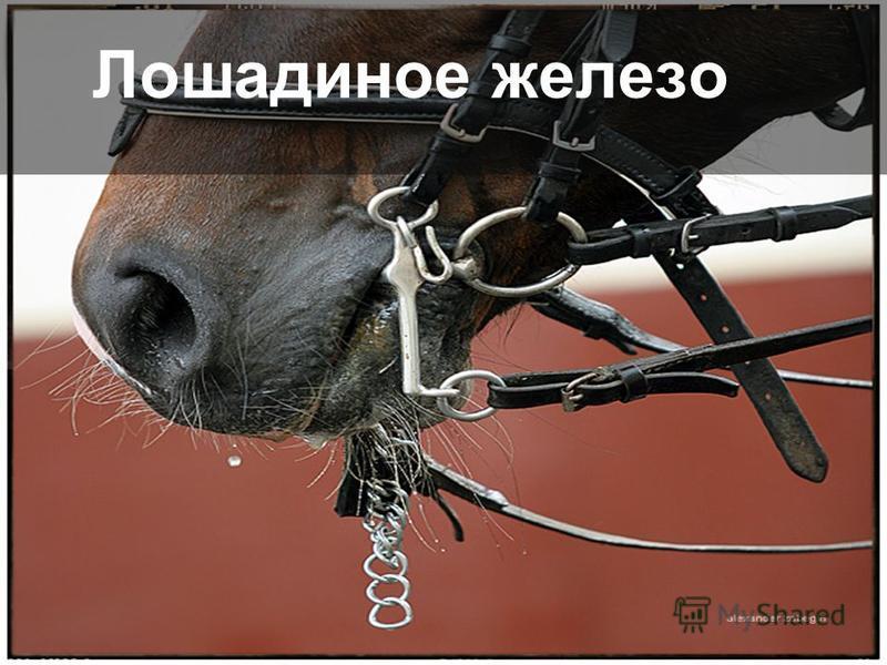 Лошадиное железо