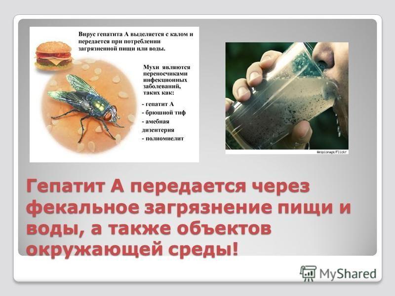 Гепатит А передается через фекальное загрязнение пищи и воды, а также объектов окружающей среды!