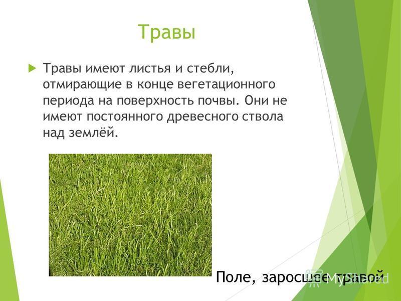Травы Травы имеют листья и стебли, отмирающие в конце вегетационного периода на поверхность почвы. Они не имеют постоянного древесного ствола над землёй. Поле, заросшее травой