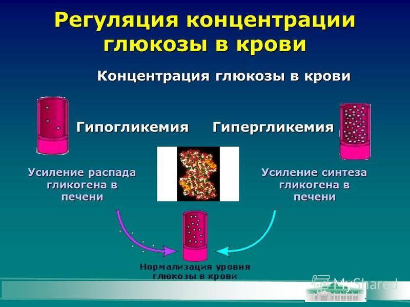 Регуляция концентрации глюкозы в крови Концентрация глюкозы в крови Усиление синтеза гликогена в печени Усиление распада гликогена в печени Гипогликемия Гипергликемия