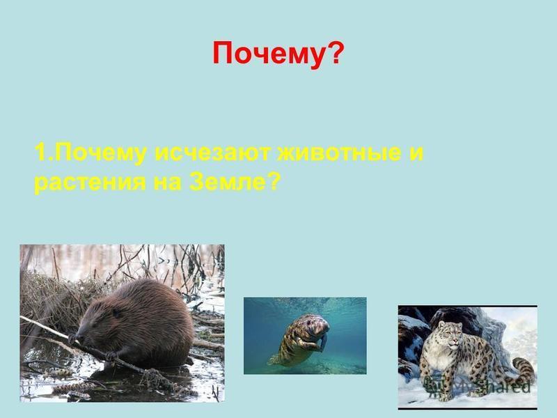 Почему? 1. Почему исчезают животные и растения на Земле?