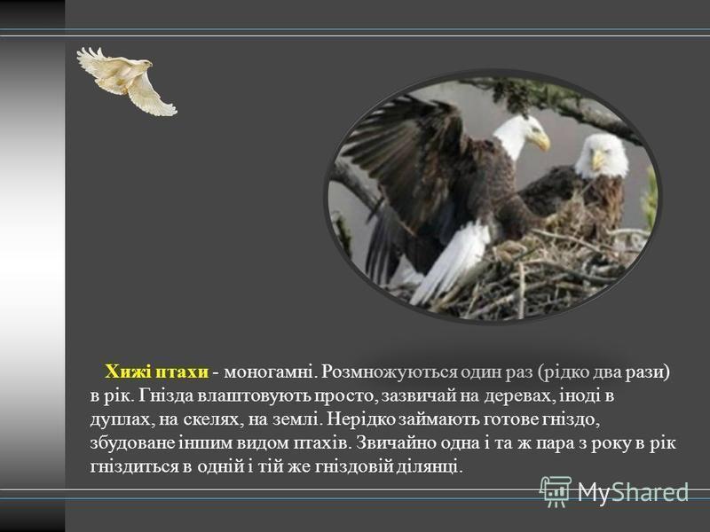 Хижі птахи - моногамні. Розмножуються один раз (рідко два рази) в рік. Гнізда влаштовують просто, зазвичай на деревах, іноді в дуплах, на скелях, на землі. Нерідко займають готове гніздо, збудоване іншим видом птахів. Звичайно одна і та ж пара з року