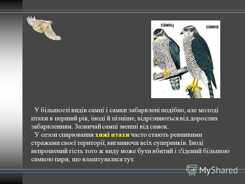 У більшості видів самці і самки забарвлені подібно, але молоді птахи в перший рік, іноді й пізніше, відрізняються від дорослих забарвленням. Зазвичай самці менші від самок. У сезон спарювання хижі птахи часто стають ревнивими стражами своєї території
