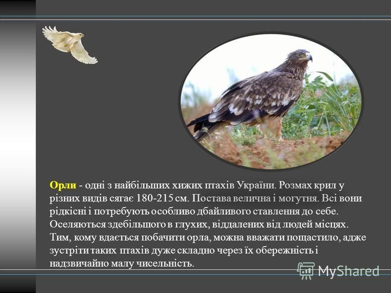 Орли - одні з найбільших хижих птахів України. Розмах крил у різних видів сягає 180-215 см. Постава велична і могутня. Всі вони рідкісні і потребують особливо дбайливого ставлення до себе. Оселяються здебільшого в глухих, віддалених від людей місцях.