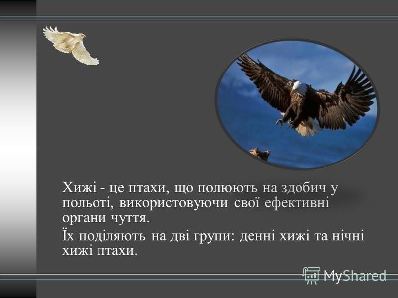 Хижі - це птахи, що полюють на здобич у польоті, використовуючи свої ефективні органи чуття. Їх поділяють на дві групи: денні хижі та нічні хижі птахи.