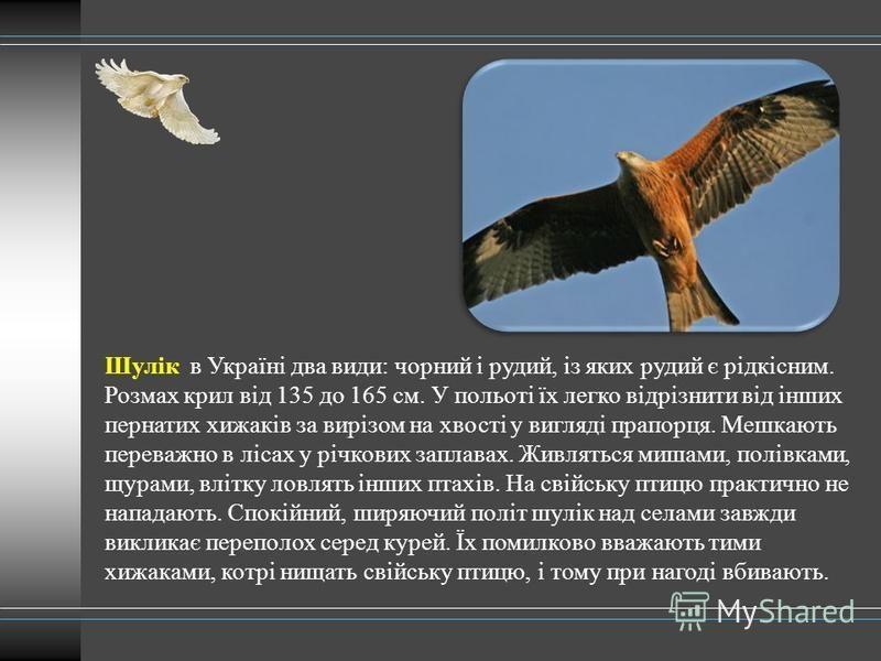 Шулік в Україні два види: чорний і рудий, із яких рудий є рідкісним. Розмах крил від 135 до 165 см. У польоті їх легко відрізнити від інших пернатих хижаків за вирізом на хвості у вигляді прапорця. Мешкають переважно в лісах у річкових заплавах. Живл