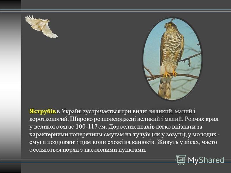 Яструбів в Україні зустрічається три види: великий, малий і коротконогий. Широко розповсюджені великий і малий. Розмах крил у великого сягає 100-117 см. Дорослих птахів легко впізнати за характерними поперечним смугам на тулубі (як у зозулі); у молод