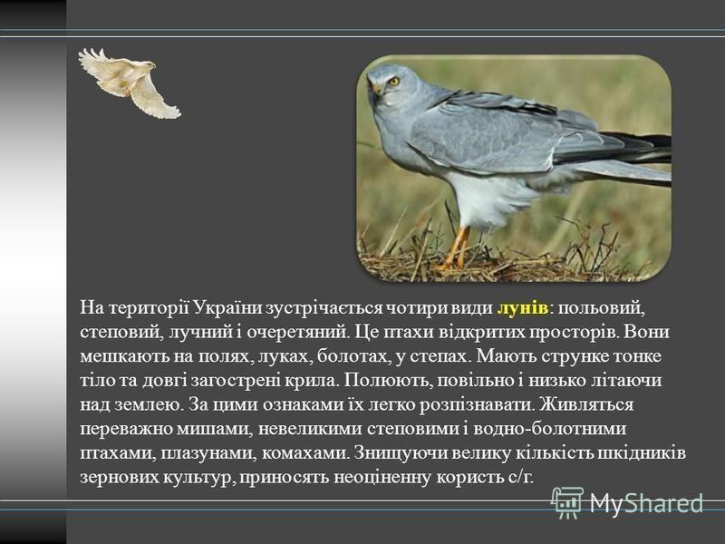 На території України зустрічається чотири види лунів: польовий, степовий, лучний і очеретяний. Це птахи відкритих просторів. Вони мешкають на полях, луках, болотах, у степах. Мають струнке тонке тіло та довгі загострені крила. Полюють, повільно і низ