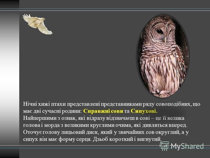 Нічні хижі птахи представлені представниками ряду совоподібних, що має дві сучасні родини: Справжні сови та Сипухові. Найпершими з ознак, які відразу відзначаєш в сові – це її велика голова і морда з великими круглими очима, які дивляться вперед. Ото