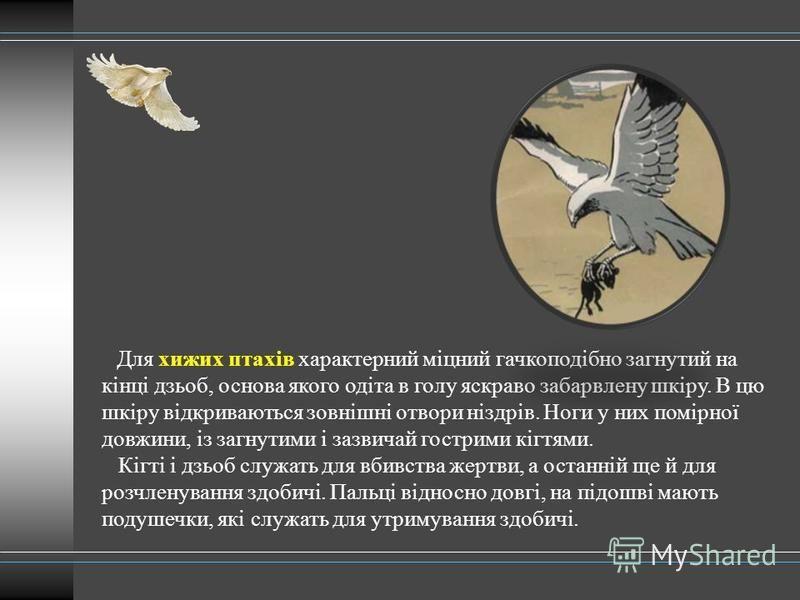 Для хижих птахів характерний міцний гачкоподібно загнутий на кінці дзьоб, основа якого одіта в голу яскраво забарвлену шкіру. В цю шкіру відкриваються зовнішні отвори ніздрів. Ноги у них помірної довжини, із загнутими і зазвичай гострими кігтями. Кіг