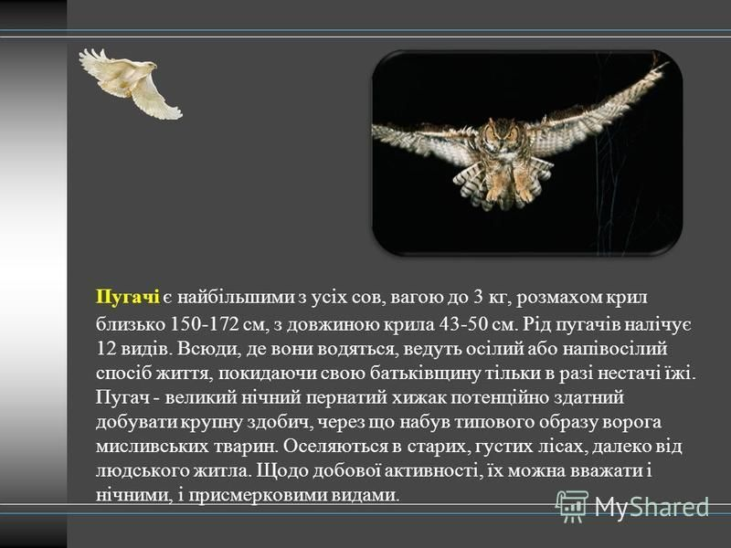 Пугачі є найбільшими з усіх сов, вагою до 3 кг, розмахом крил близько 150-172 см, з довжиною крила 43-50 см. Рід пугачів налічує 12 видів. Всюди, де вони водяться, ведуть осілий або напівосілий спосіб життя, покидаючи свою батьківщину тільки в разі н