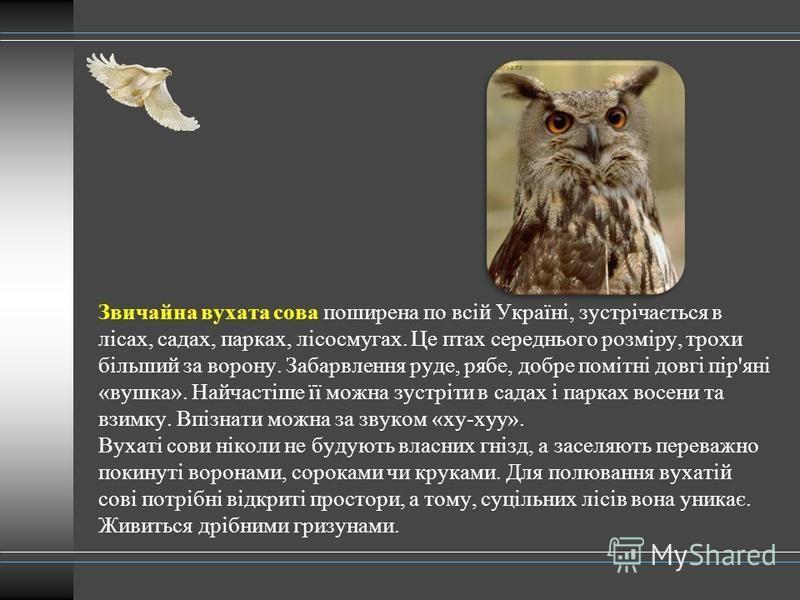 Звичайна вухата сова поширена по всій Україні, зустрічається в лісах, садах, парках, лісосмугах. Це птах середнього розміру, трохи більший за ворону. Забарвлення руде, рябе, добре помітні довгі пір'яні «вушка». Найчастіше її можна зустріти в садах і