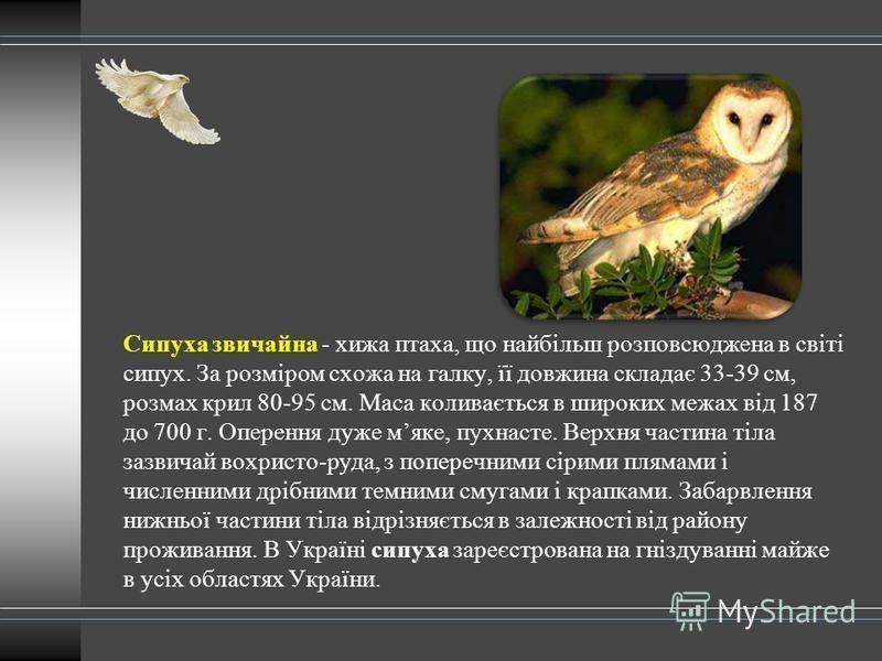 Сипуха звичайна - хижа птаха, що найбільш розповсюджена в світі сипух. За розміром схожа на галку, її довжина складає 33-39 см, розмах крил 80-95 см. Маса коливається в широких межах від 187 до 700 г. Оперення дуже мяке, пухнасте. Верхня частина тіла