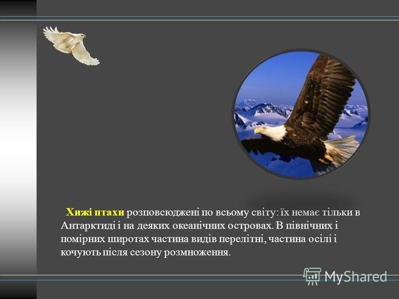 Хижі птахи розповсюджені по всьому світу: їх немає тільки в Антарктиді і на деяких океанічних островах. В північних і помірних широтах частина видів перелітні, частина осілі і кочують після сезону розмноження.