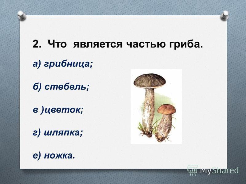 2. Что является частью гриба. а ) грибница ; б ) стебель ; в ) цветок ; г ) шляпка ; е ) ножка.