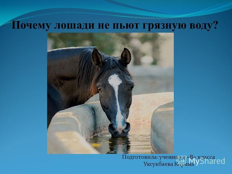 Почему лошади не пьют грязную воду? Подготовила: ученица 4 «В» класса Уксукбаева Карина