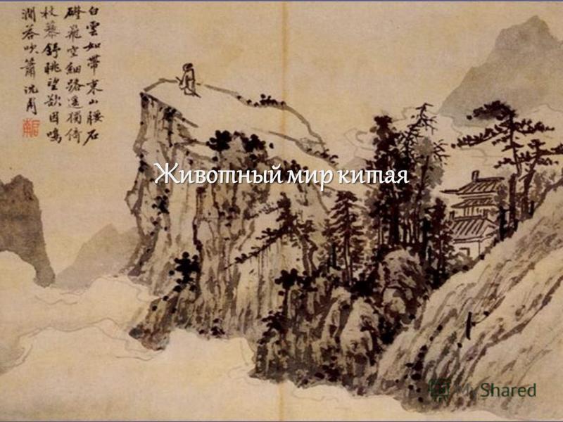 Животный мир китая