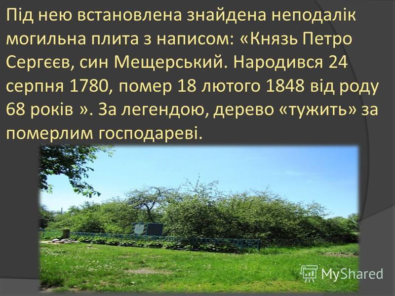 Під нею встановлена знайдена неподалік могильна плита з написом: «Князь Петро Сергєєв, син Мещерський. Народився 24 серпня 1780, помер 18 лютого 1848 від роду 68 років ». За легендою, дерево «тужить» за померлим господареві.
