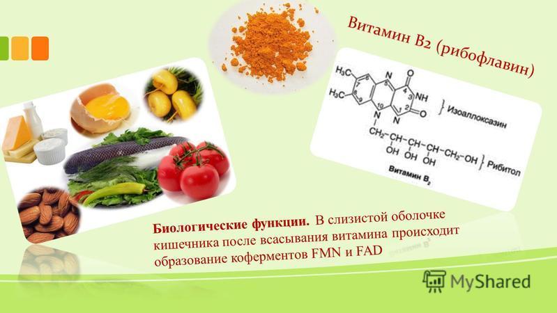 Биологические функции. В слизистой оболочке кишечника после всасывания витамина происходит образование коферментов FMN и FAD