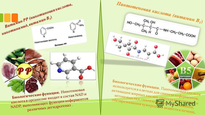 Витамин РР (никотиновая кислота, никотинамид, витамин B 3 ) Биологические функции. Никотиновая кислота в организме входит в состав NAD и NADP, выполняющих функции коферментов различных дегидрогеназ. Пантотеновая кислота (витамин B 5 ) Биологические ф