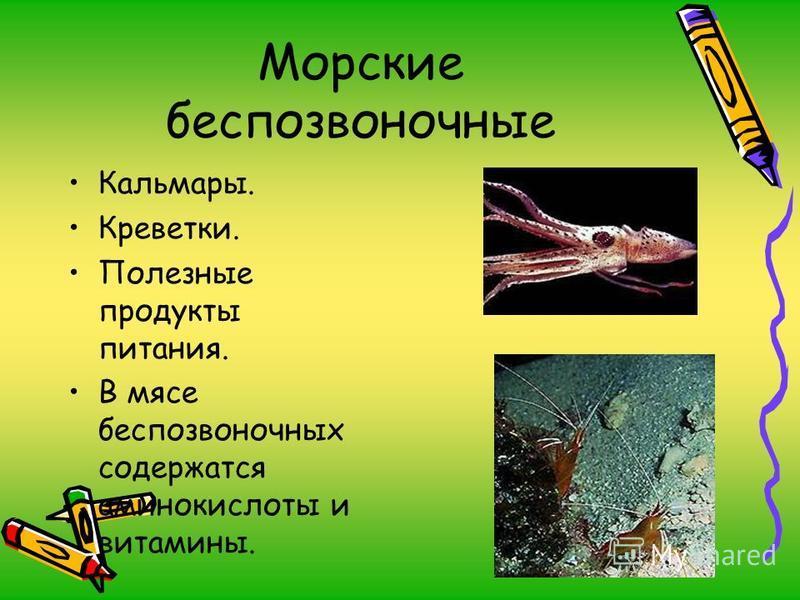 Морские беспозвоночные Кальмары. Креветки. Полезные продукты питания. В мясе беспозвоночных содержатся аминокислоты и витамины.
