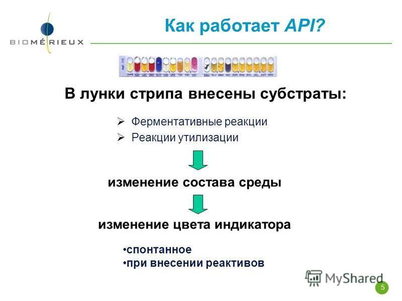 5 Как работает API? В лунки стрипа внесены субстраты: Ферментативные реакции Реакции утилизации изменение состава среды изменение цвета индикатора спонтанное при внесении реактивов