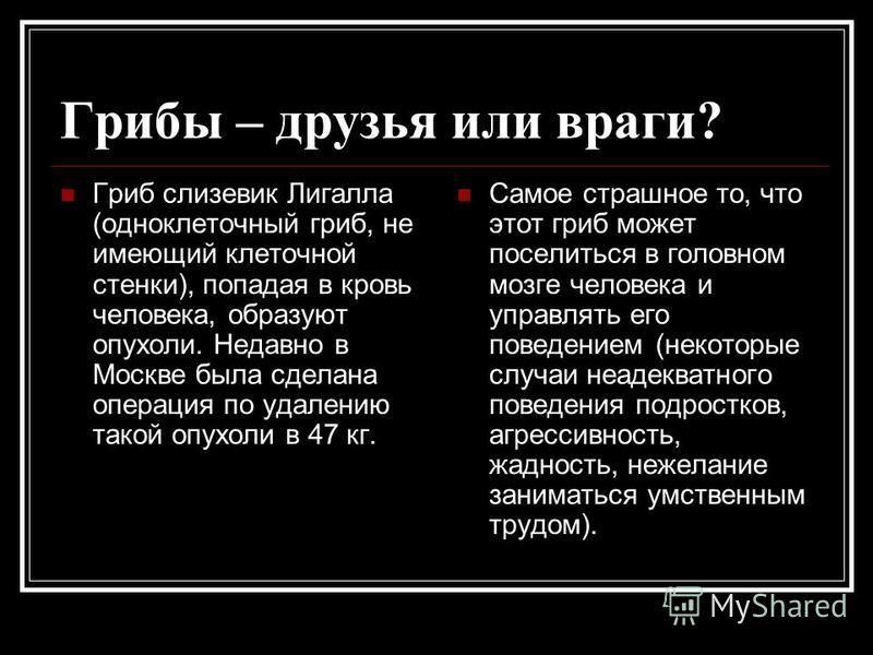 Грибы – друзья или враги? Гриб слизевик Лигалла (одноклеточный гриб, не имеющий клеточной стенки), попадая в кровь человека, образуют опухоли. Недавно в Москве была сделана операция по удалению такой опухоли в 47 кг. Самое страшное то, что этот гриб